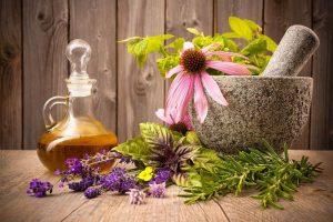 Какие травы полезны при мастопатии