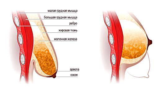 Причины обвисания груди