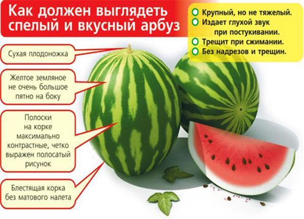 Как выбрать арбуз